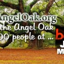 Angel Oak at Bonnaroo